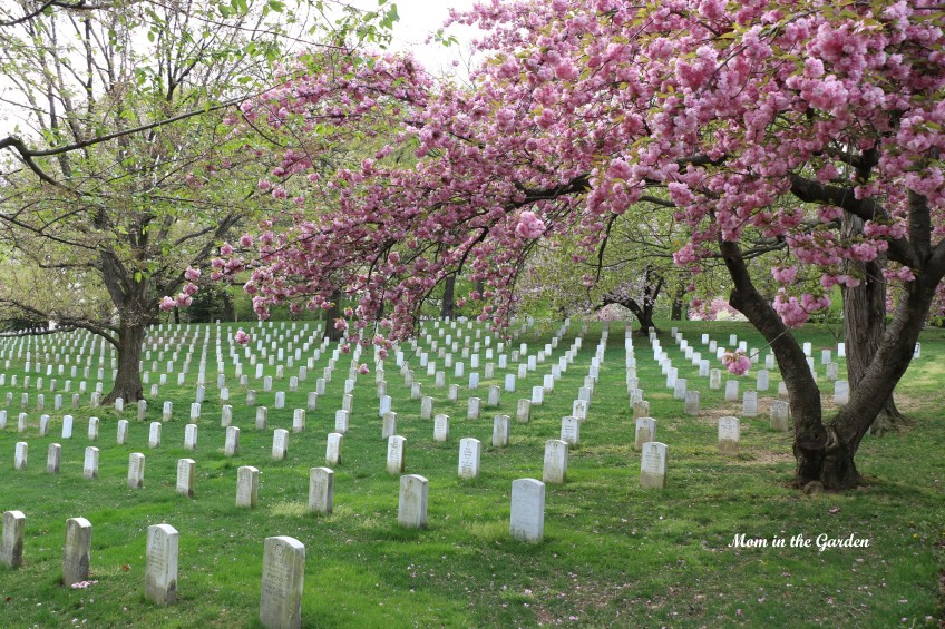 Arlington National Cemetery view of headstones