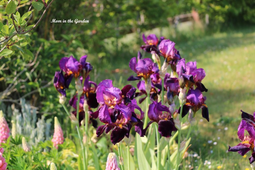 Iris Benton Storrington group