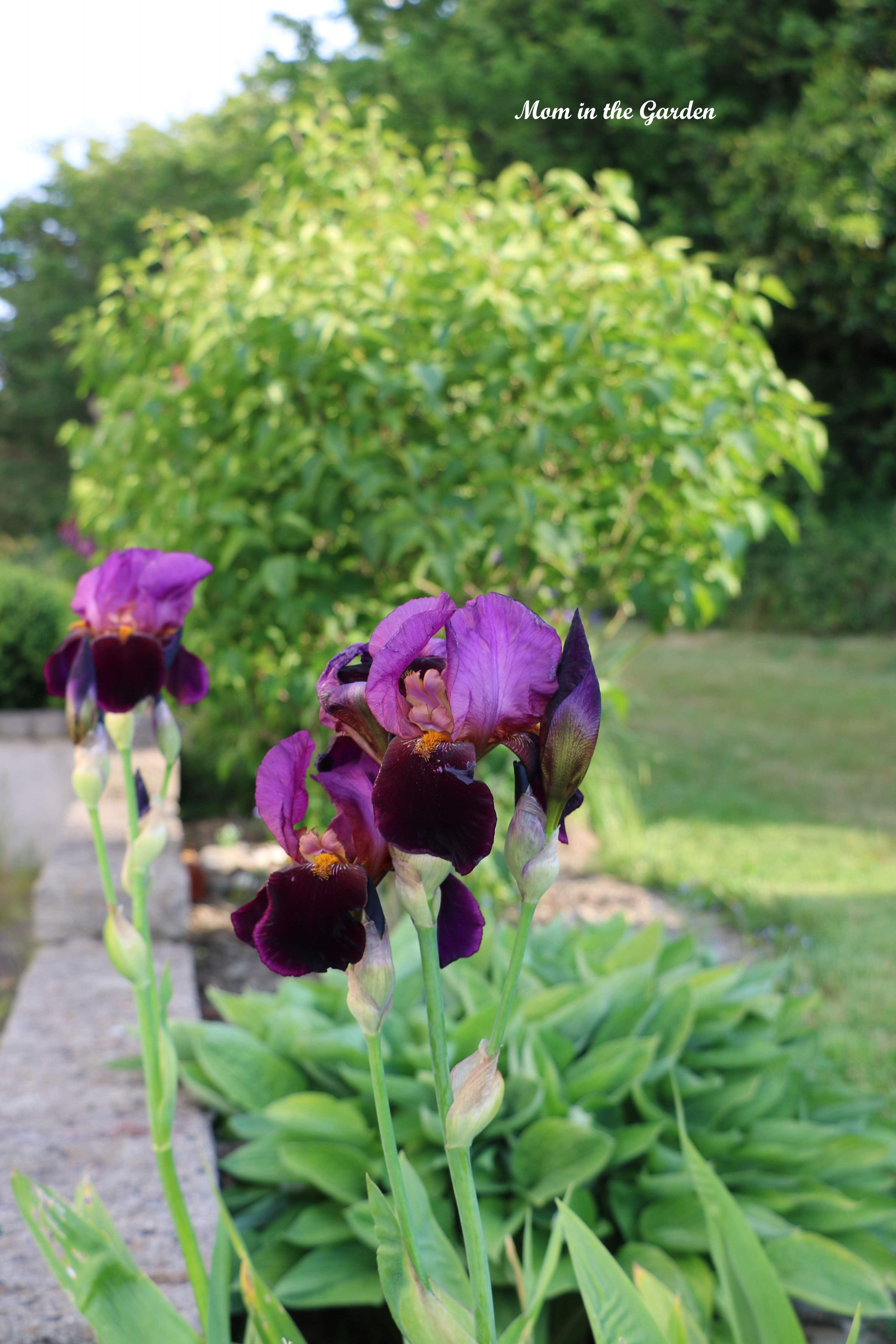Iris Benton Storrington side garden