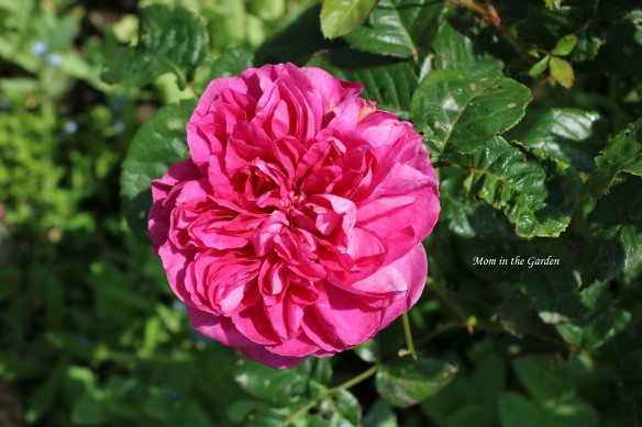 James Austin full bloom