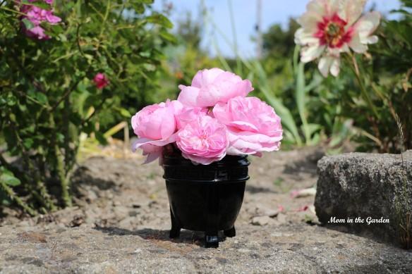 Pink David Austin roses in black vase
