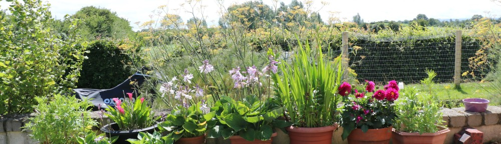 Back deck flowers
