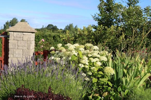July 10 front gate garden