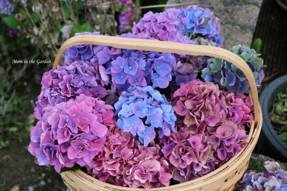 basket of hydrangea