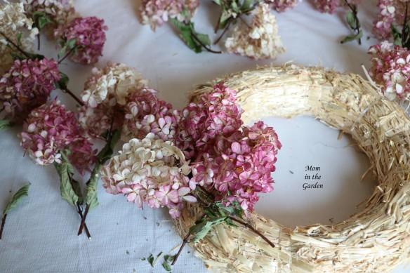 Hydrangea Vanille Fraise Paniculata Renhy first four stems