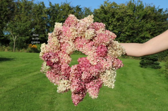Hydrangea Vanille Fraise Paniculata Renhy full wreath outside