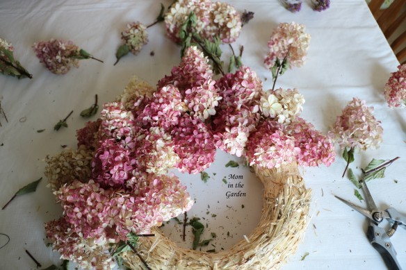 Hydrangea Vanille Fraise Paniculata Renhy wreath in progress