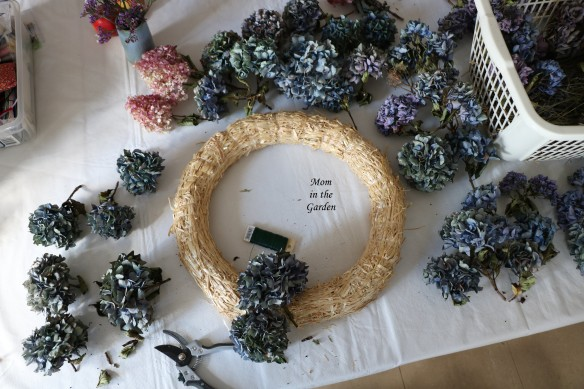 Hydrangea Wreath beginning