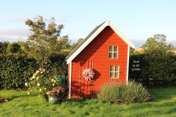 Playhouse Sept 20 hydrangea paniculata vanille fraise