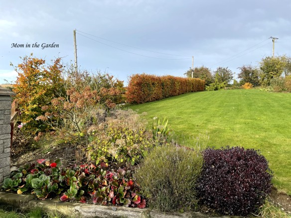 Front hedge view October