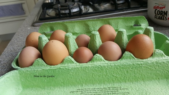 all sized eggs