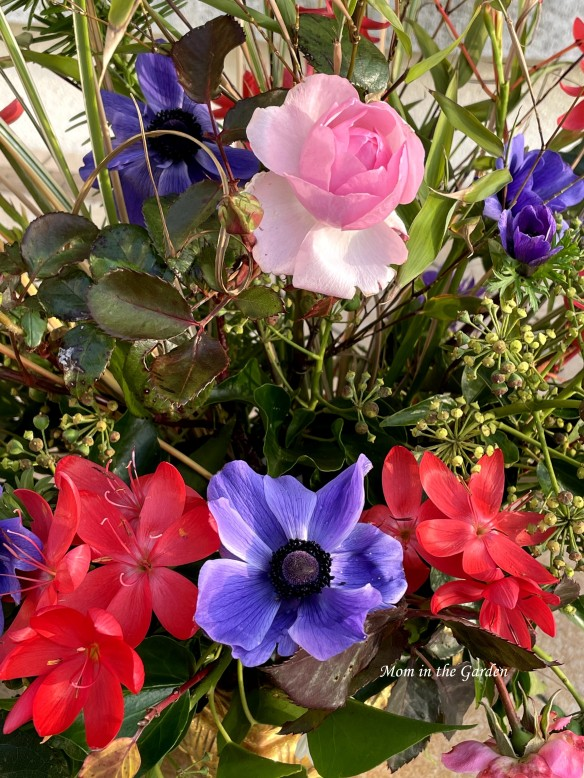 Mr Fokker anemone, Hesperanthus and David Austin Roses