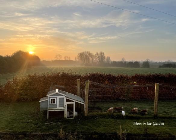 hen house sunny morning November
