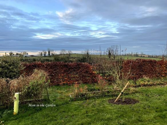 mystic sky November garden
