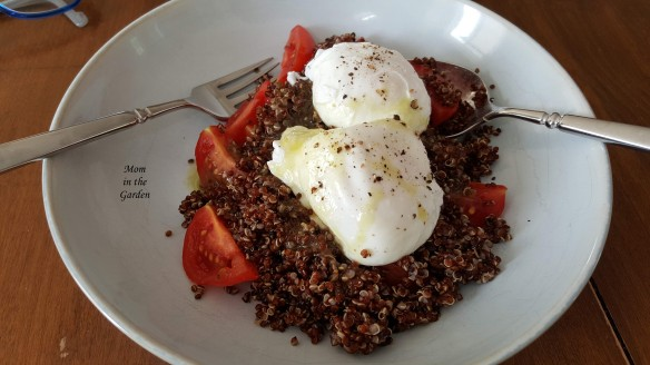 poached eggs and quinoa