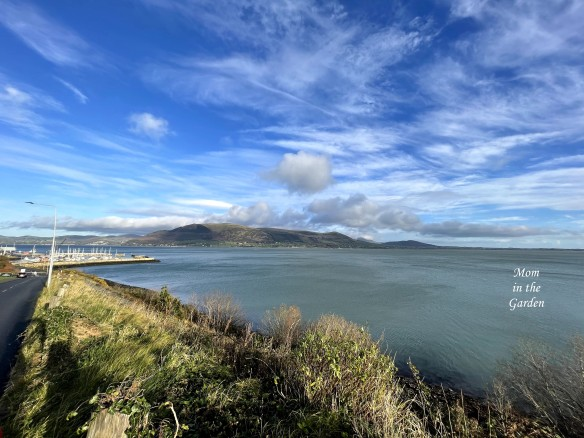 Carlingford near greenway