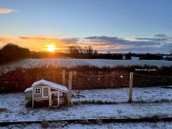 Chicken coop sun and snow Dec 31st