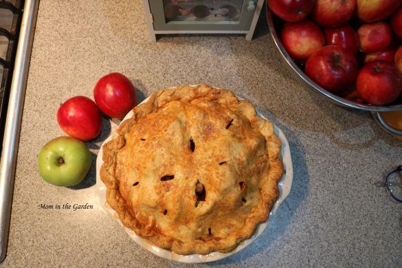 Cooked apple pie (1)