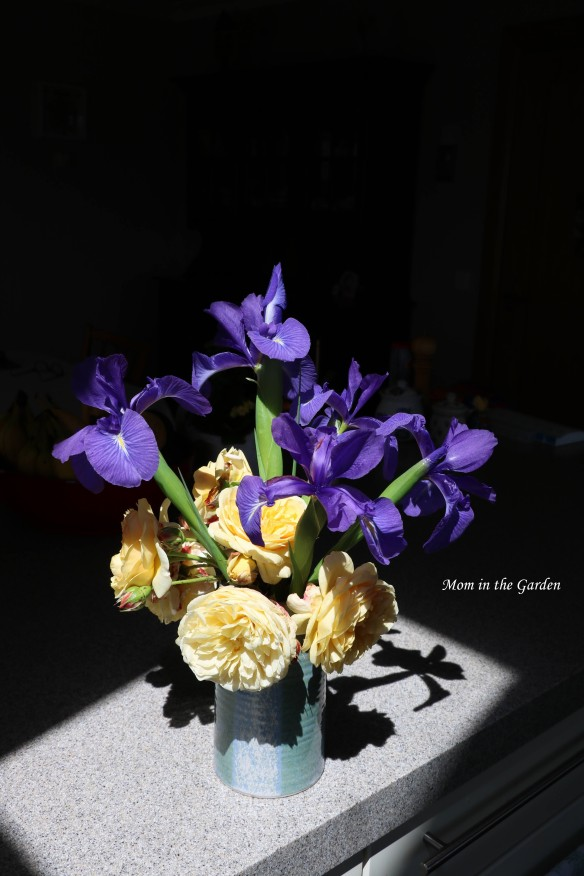 Dutch Iris and Teasing Georgia roses in dark