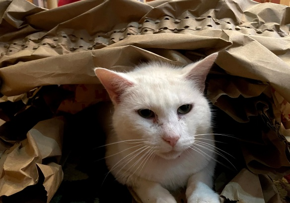Kitty cat under bags