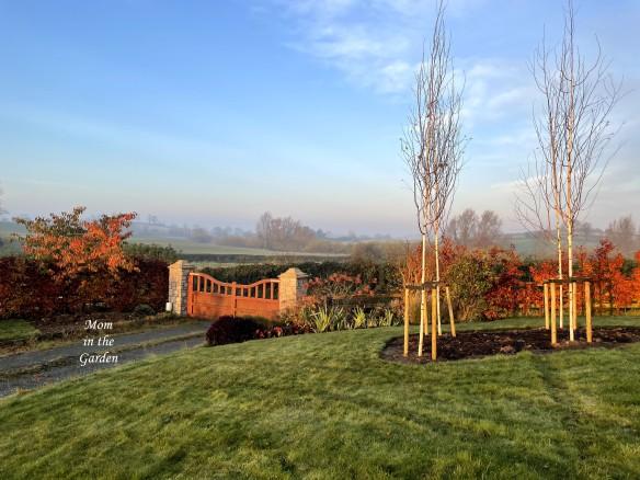 sunny foggy morning birch trees