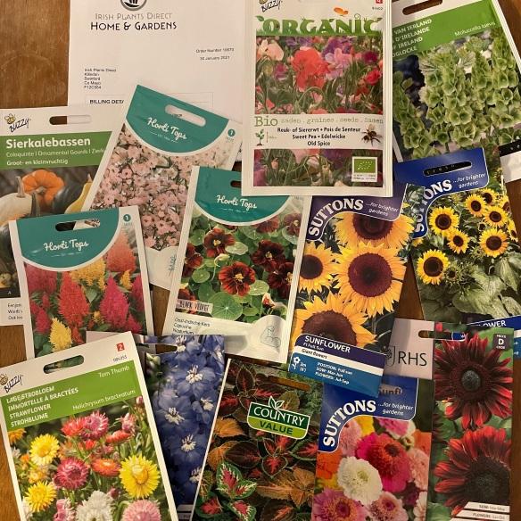 Irish Plants Direct seeds