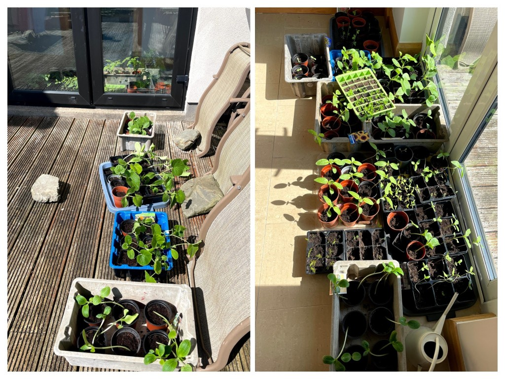 seeds started in pots