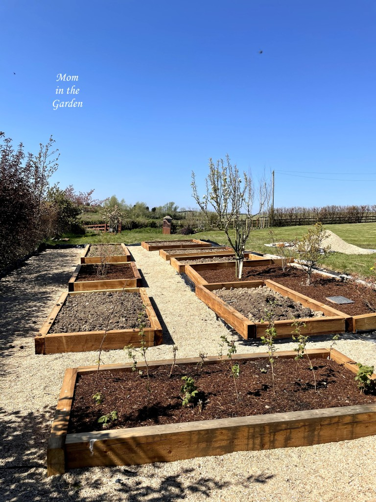 Veggie beds April 24