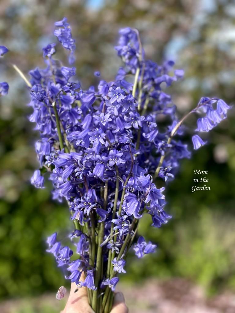 Native Bluebell hand bouquet