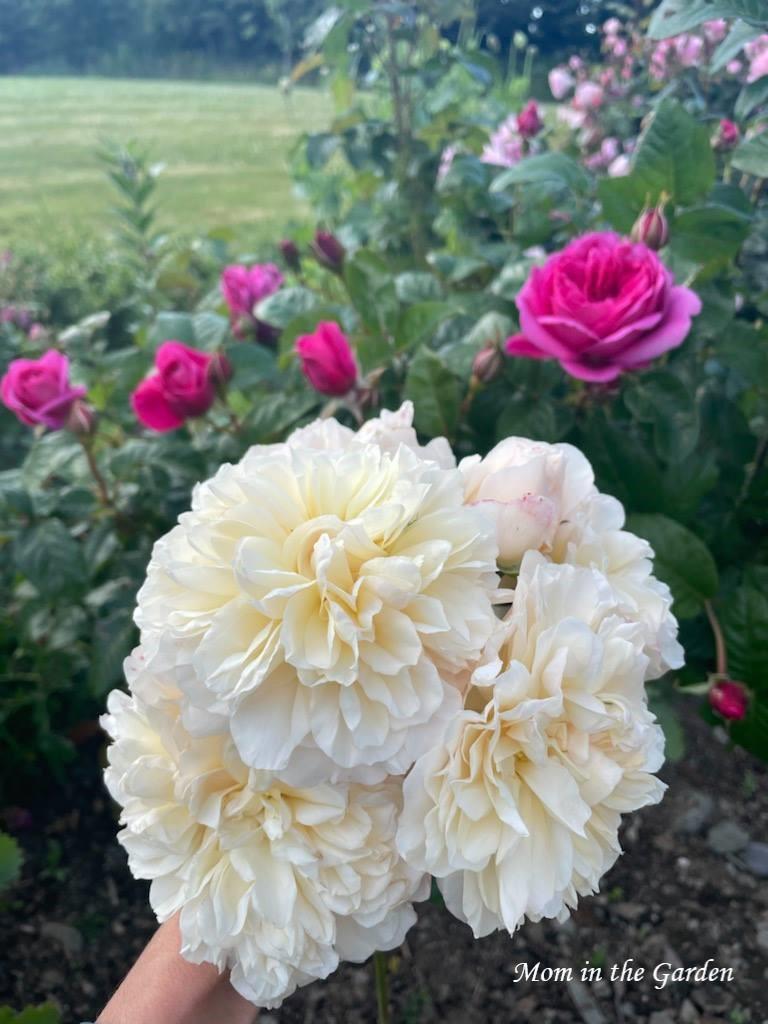Lichfield angel hand bouquet