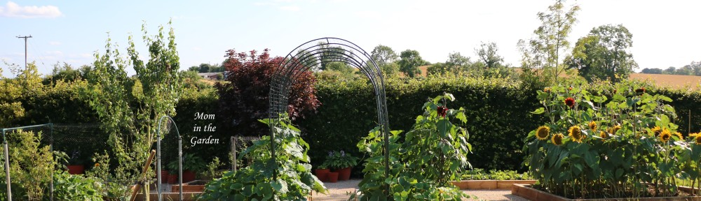 pumpkin Arch garden update 17 July