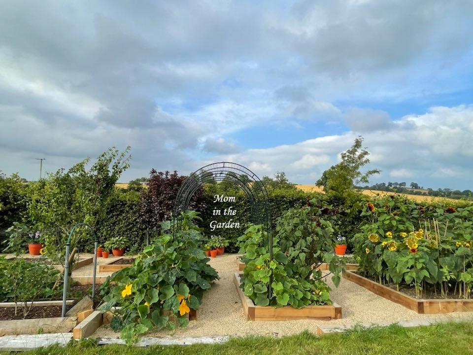 Full garden update July 24