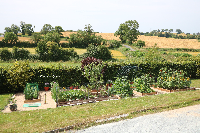 Full view of garden incl raspberries 22 July