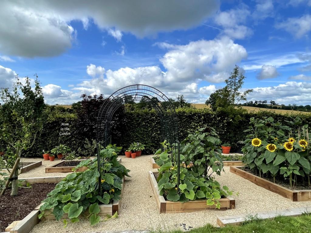 Pumpkins growing on arch in garden