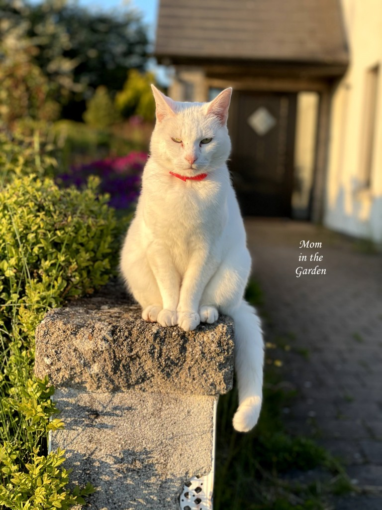 Kitty on Rose bed wall in sun