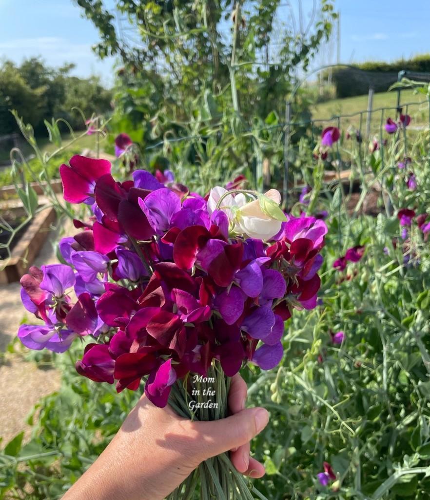 Sweet pea hand held bouquet