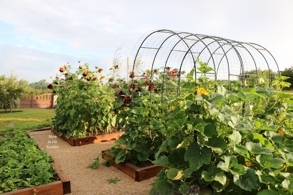 Back of pumpkin arch 7 Aug 2021