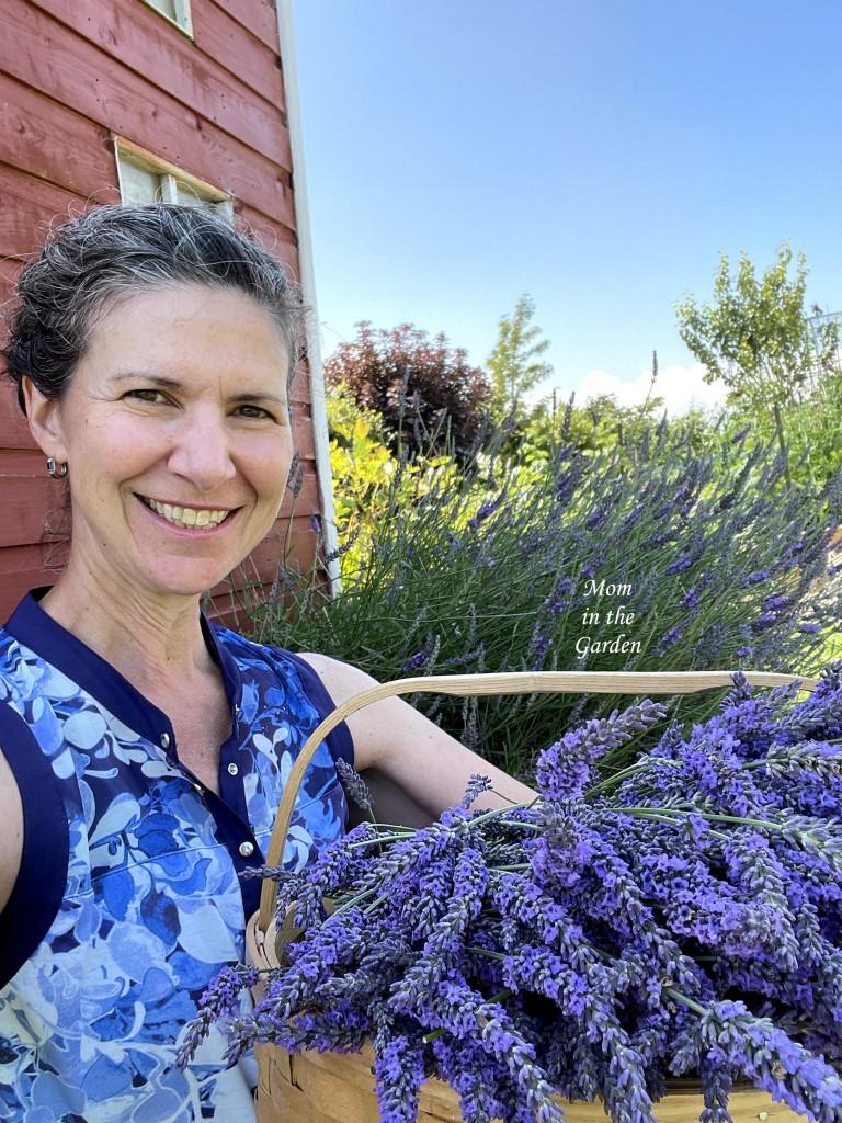 Dana with lavender harvest