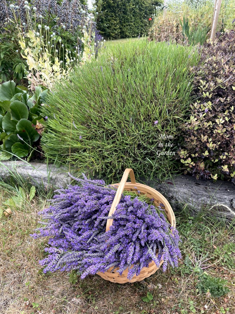 lavender and shaved plant