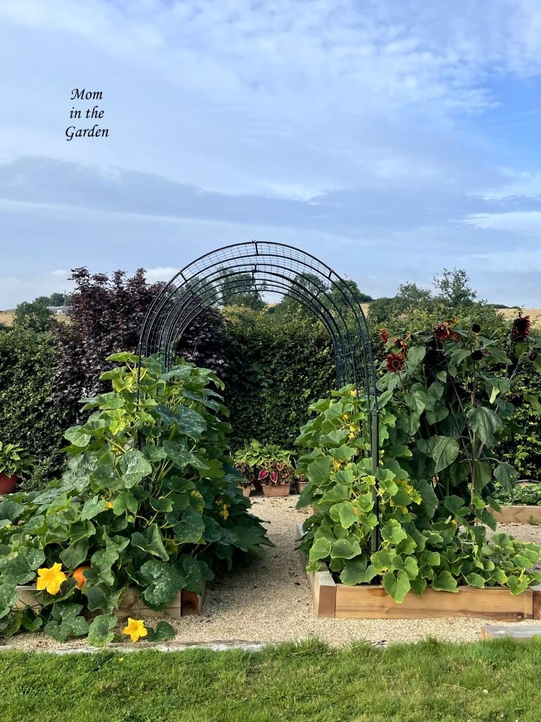 Pumpkin arch update 14 Aug 21
