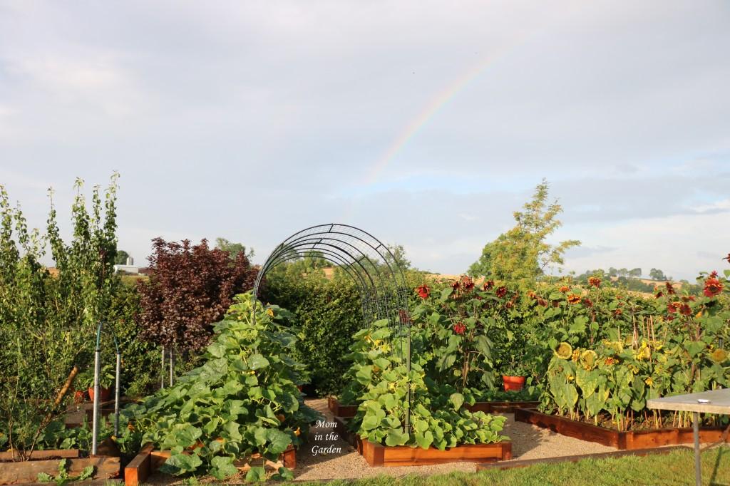 Pumpkin arch update 7 Aug 2021 with rainbow