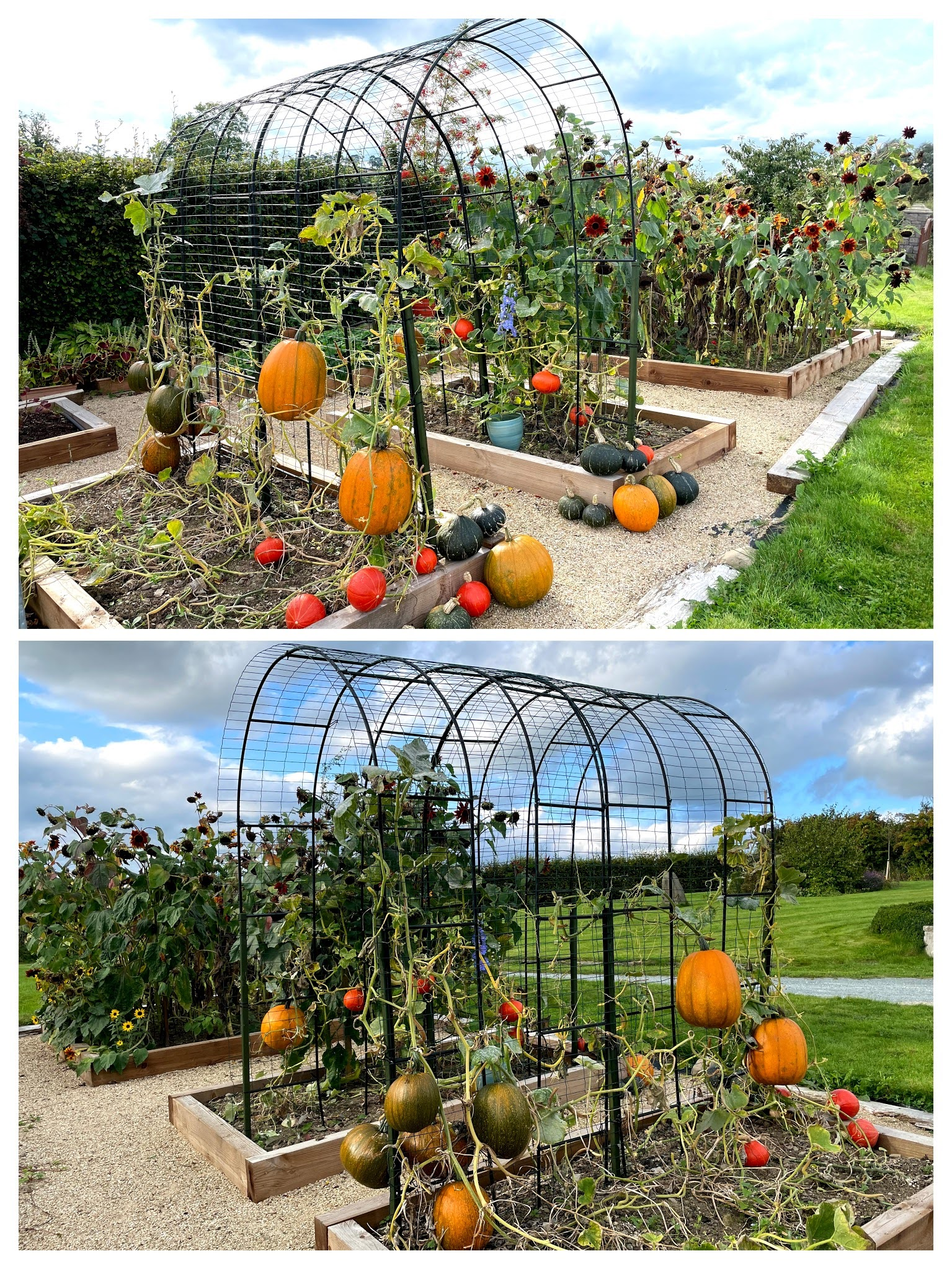The front and back view of the pumpkin arch with squash and pumpkins