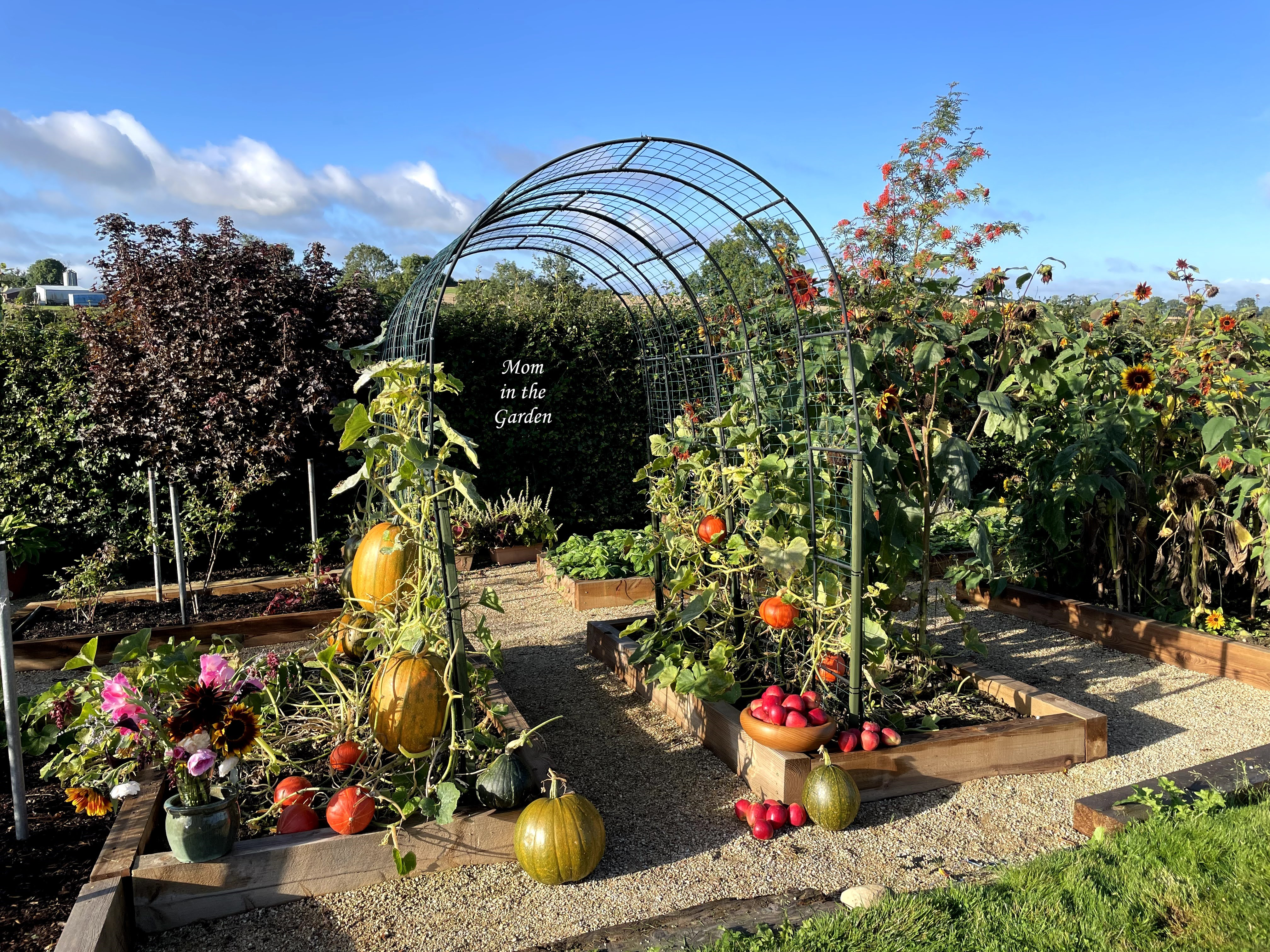 Pumpkin arch with apples and flowers